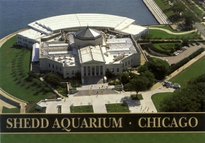 shedd-aquarium