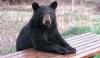 bear-table