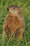 groundhog4