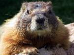 groundhog8