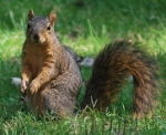 squirrel2